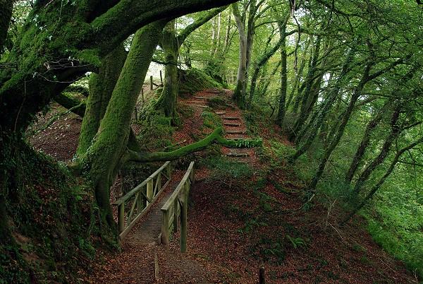 Woodland of Lydford Gorge