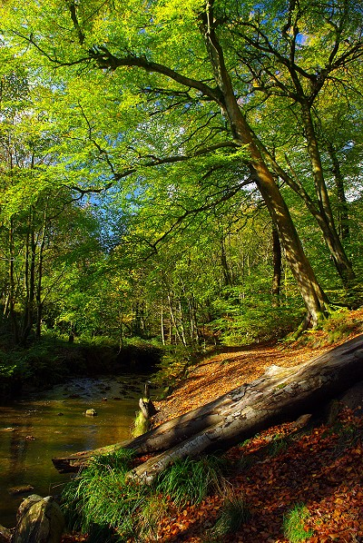 Redisher Wood