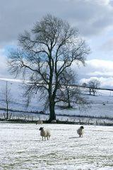 Snowscene near Winterburn
