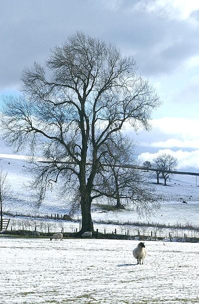 Snow scene near Winterburn