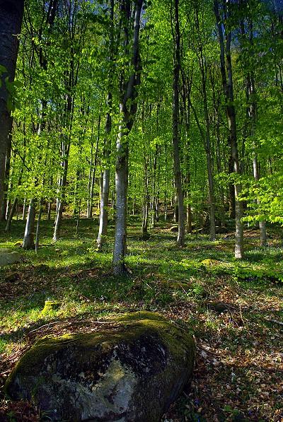 Rainsbarrow Wood