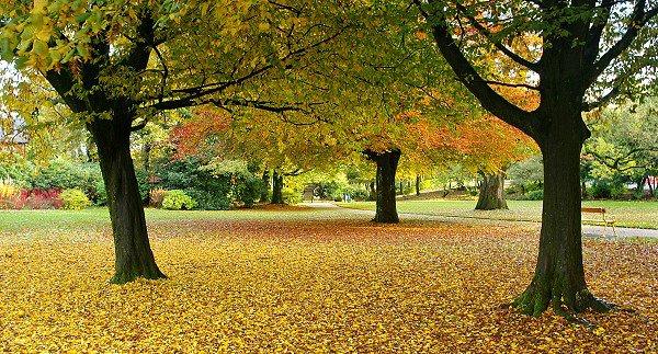 Lovely Autumn!