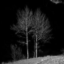Autumn Birches, Dauphine Alps, France