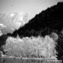 Eau, Arbres, Neiges et Oiseau, French Alps