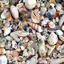 Seashells, Khao Lak, Thailand
