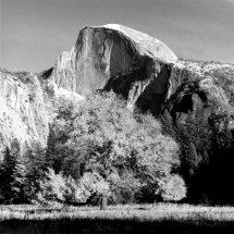 Tree and Half Dome, Yosemite