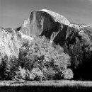 Tree and Half Dome, Yosemite, California