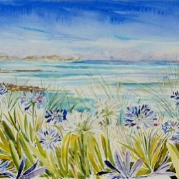 """""""Agapanthus on Tresco"""", Isles of Scilly"""