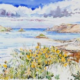 """""""Golden Gorse"""" (Tresco Channel) Isles of Scilly"""