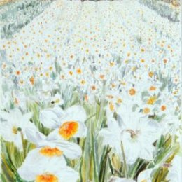 """""""High Life Daffodils"""", St Marys, Isles of Scilly"""
