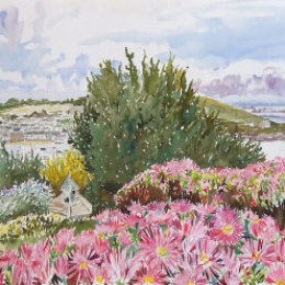 Moyana Mesembryanthemums, St Marys, Isles of Scilly