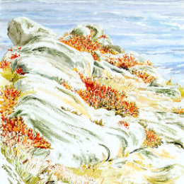"""Ox Eye Daisies"", Deep Point, St Marys, Isles of Scilly"