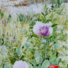 """""""Porthloo Poppies"""", St Marys, Isles of Scilly"""