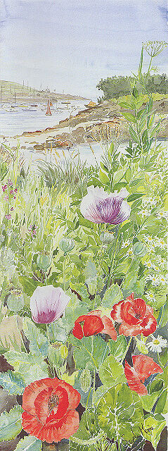 """""""Porthloo Poppies"""" St Marys, Isles of Scilly"""