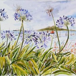 """""""Scillonian III behind the Agapanthus"""" St Marys, Isles of Scilly"""