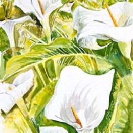 """""""Arums, Mount Todden"""", St Marys, Isles of Scilly"""