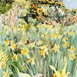"""Daffodil Path to Kitty Down"""