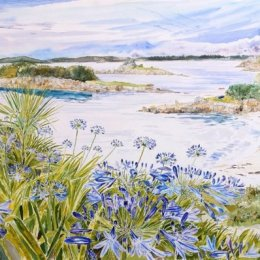 """""""Donald's Agapanthus"""", Harrys Walls, St Marys, Isles of Scilly"""