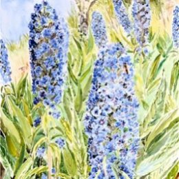 """""""May Echiums"""", St Marys, Isles of Scilly"""