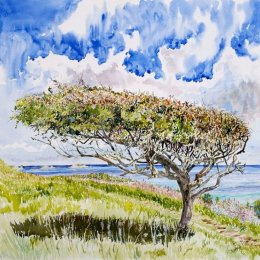 """""""May Tree"""", Mount Todden, St Marys, Isles of Scilly"""