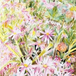 """South African Garden, Tresco"", Isles of Scilly"