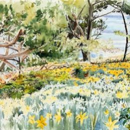 """Sunlit Daffodils, Bar Point"", St Marys, Isles of Scilly"