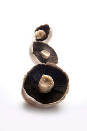 Stylised Food Photography: Mushrooms