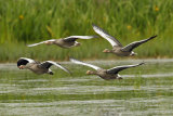 Formation-flying