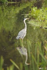 Heron-reflecting