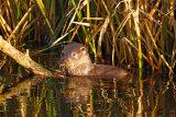 Otter-cub 2