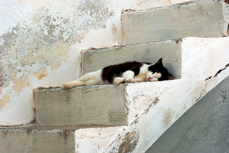 A Cat in Naxos