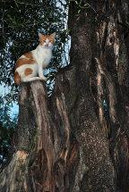 A cat on an Olive Tree
