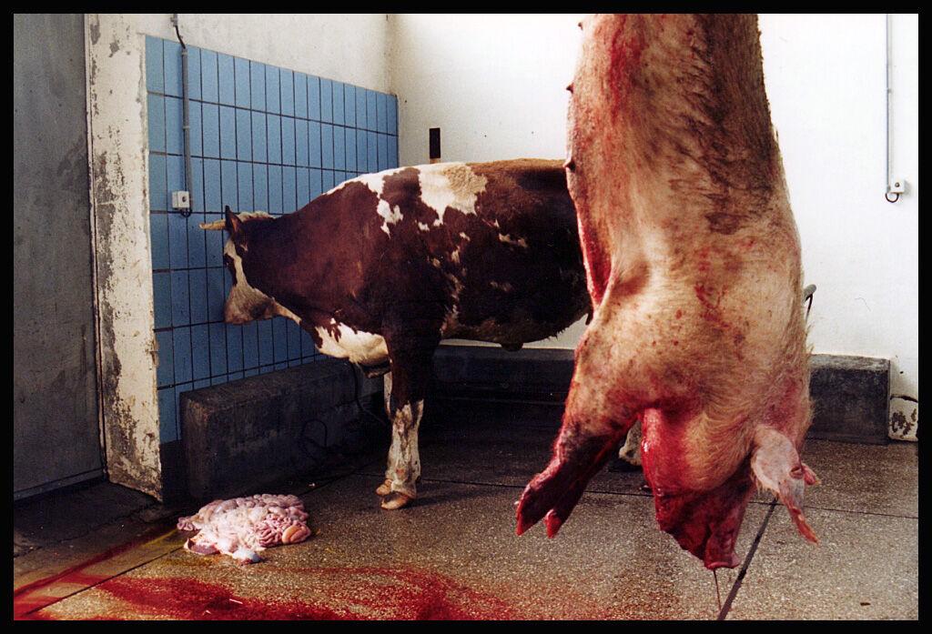 Carnivorous Conscience