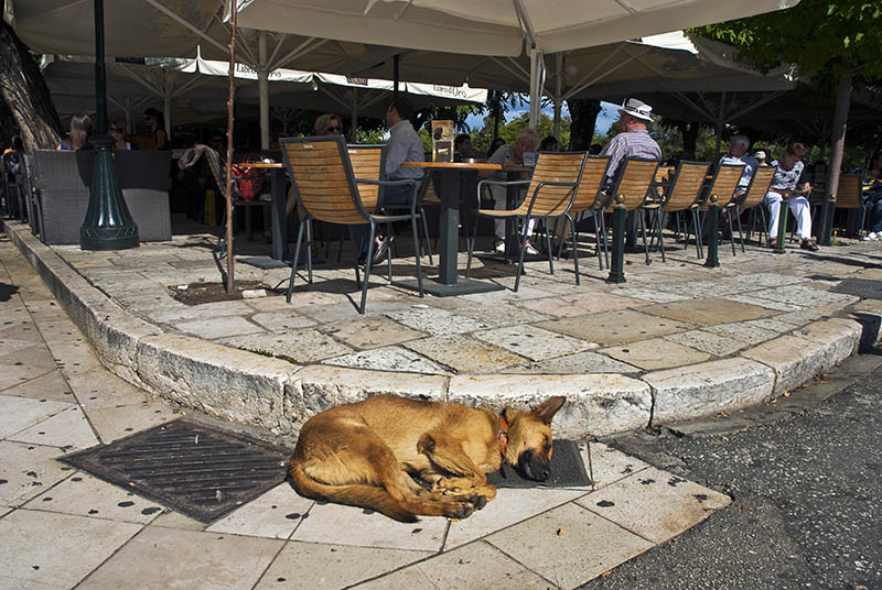 Sleeping Dog in Corfu Town.