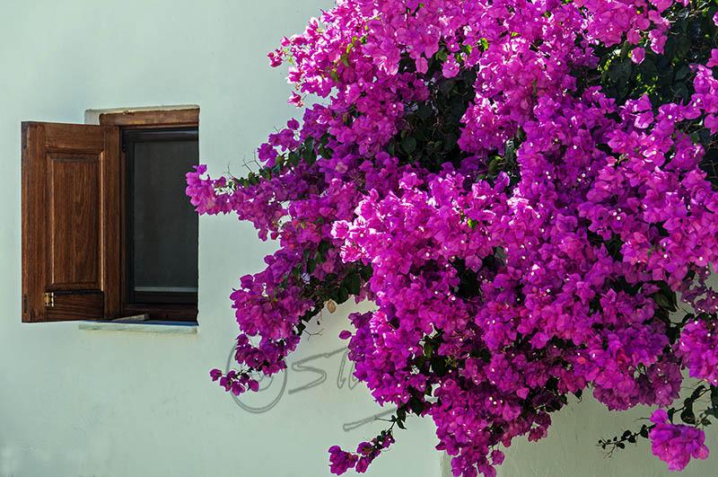 Window & Petals, Emborio.