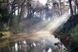 Misty Pool