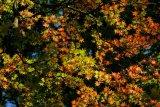 Autumn Draws Close