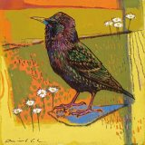 Starling 29x29cm inc frame £400
