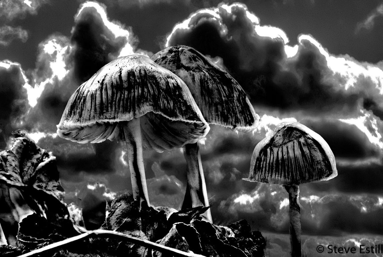 Stormy Mycena