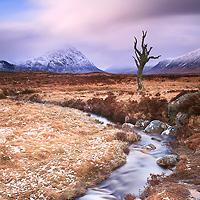 Lone Tree, Rannoch Moor