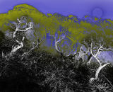 winter gorse #3 - photo etching, digitally tinted