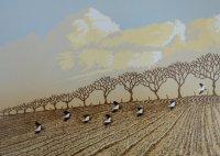 Winter Lapwings