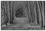 Tree Lined Alley 01