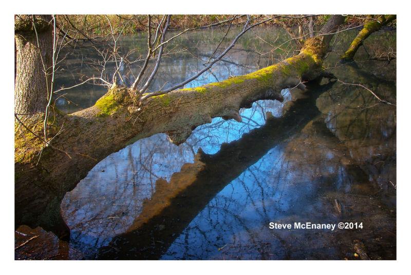 Fallen Tree 02