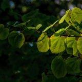 Tree_Shadows_01
