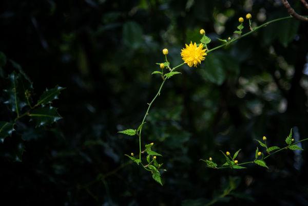Valley_Gardens_05