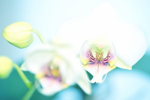 Orchid_03