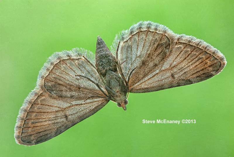 Moth_Closeup_01