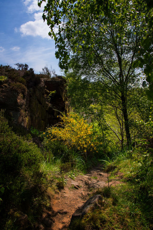 Chevin_Forest_02