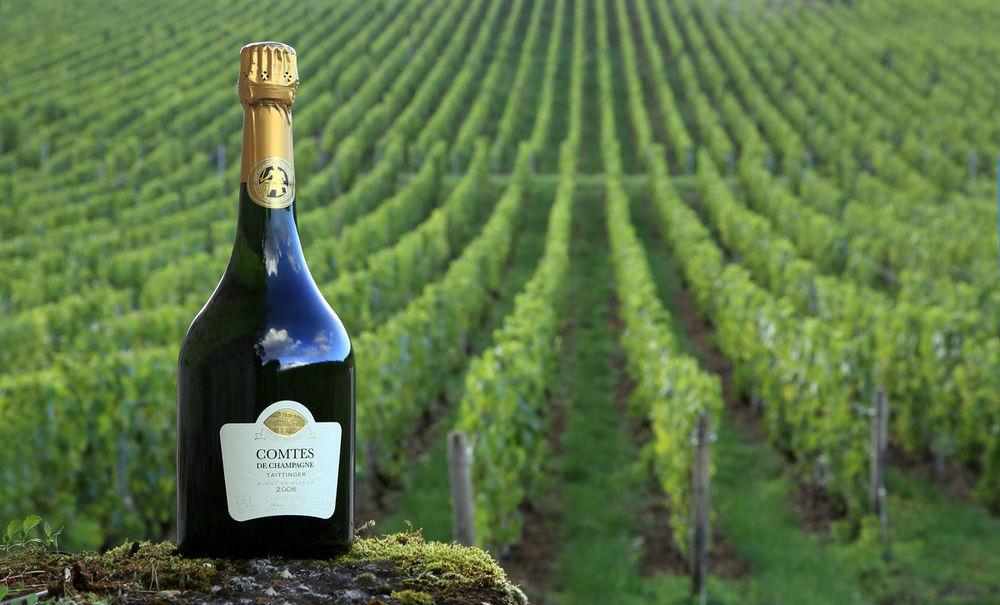 Comte at Taittinger Champagne vineyard